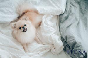 Cuál-es-la-mejor-tela-para-sábanas-